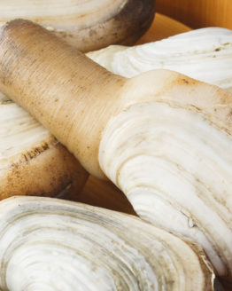 geoduck-supplier