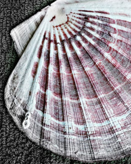 pacific-scallop-broker