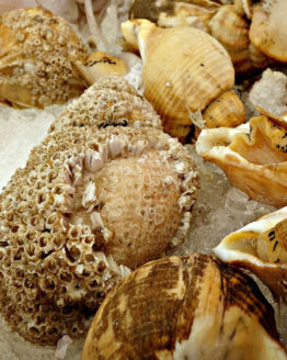 whelk-bc-supplier